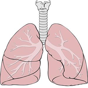 Comment le sucre affecte-t-il vos poumons?