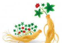 Le ginseng peut aider à traiter le diabète