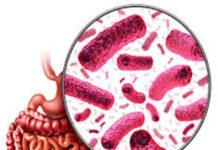 Les bactéries intestinales peuvent être liées au diabète de type 2