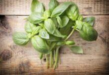 6 herbes puissantes pour la régénération des dommages nerveux